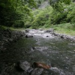 Stream of Native Cycle – Kosuge River C&R, Yamanashi